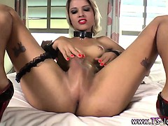 shemale-tranny-babe-jerking-off